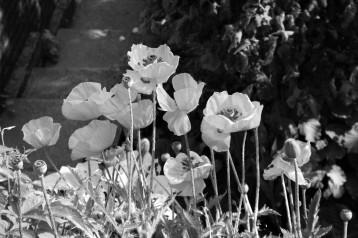 RUBY garden 046 (2)