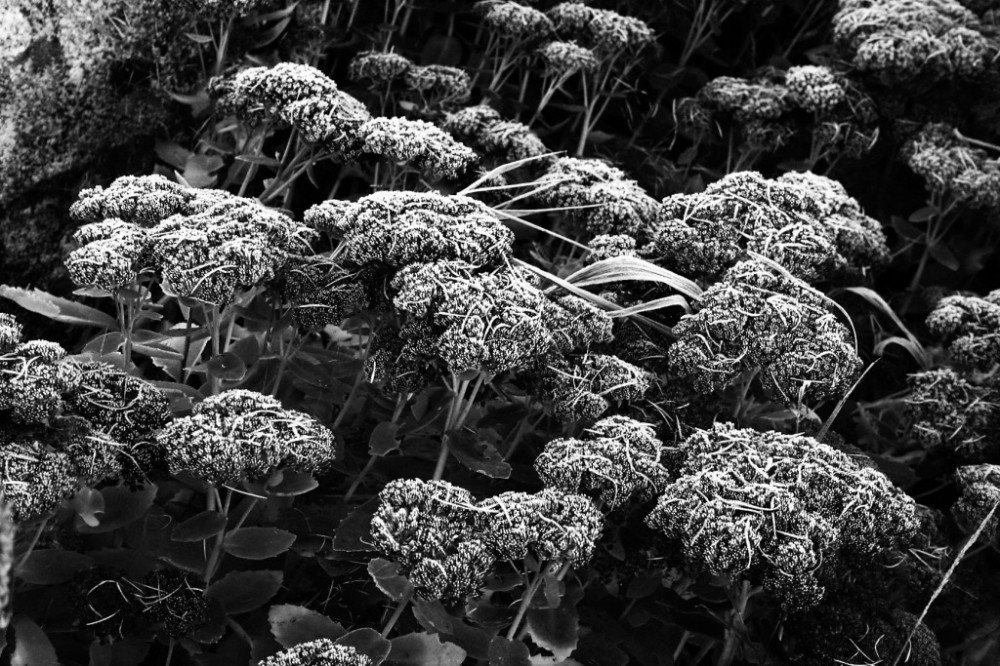 garden-nov16-019-3-comp
